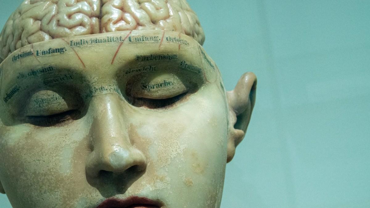 Anatomical model of brain