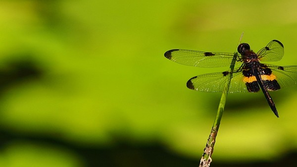 A green dragonfly sitting on a eaf