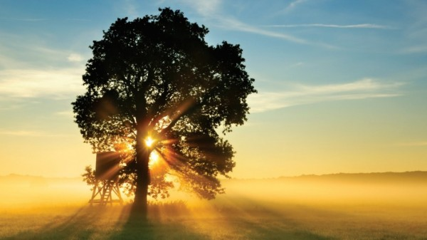 Tree silhouetted by sunshine